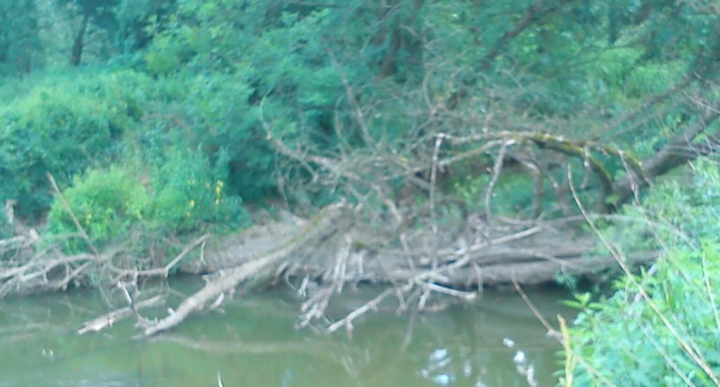 3 filipuv strom jsme neprenaseli nad kmenem ale skvirkou vpravo dole podpluli